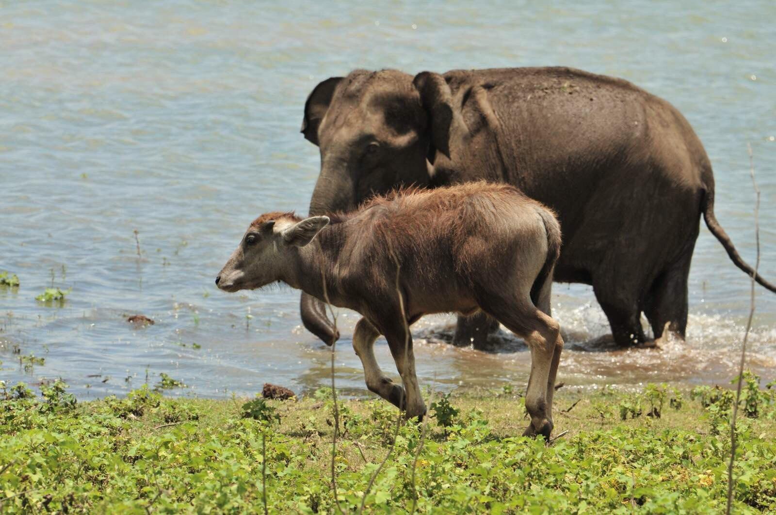 造访动物的天堂-佛教斯里兰卡