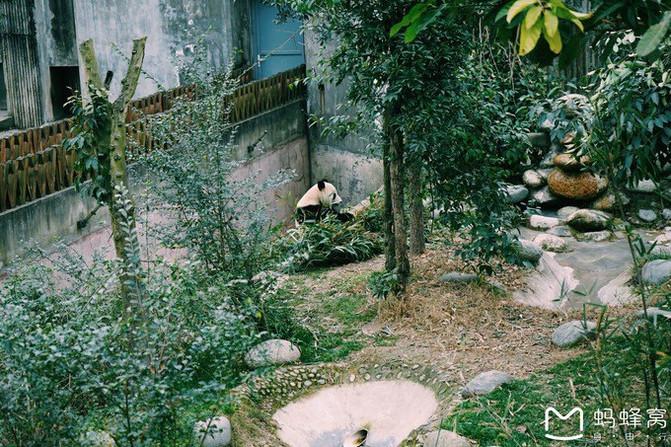 乐驼网-谁说不攻略配--熊猫的黑白-游记故事会潮澳美食文化品鉴交图片