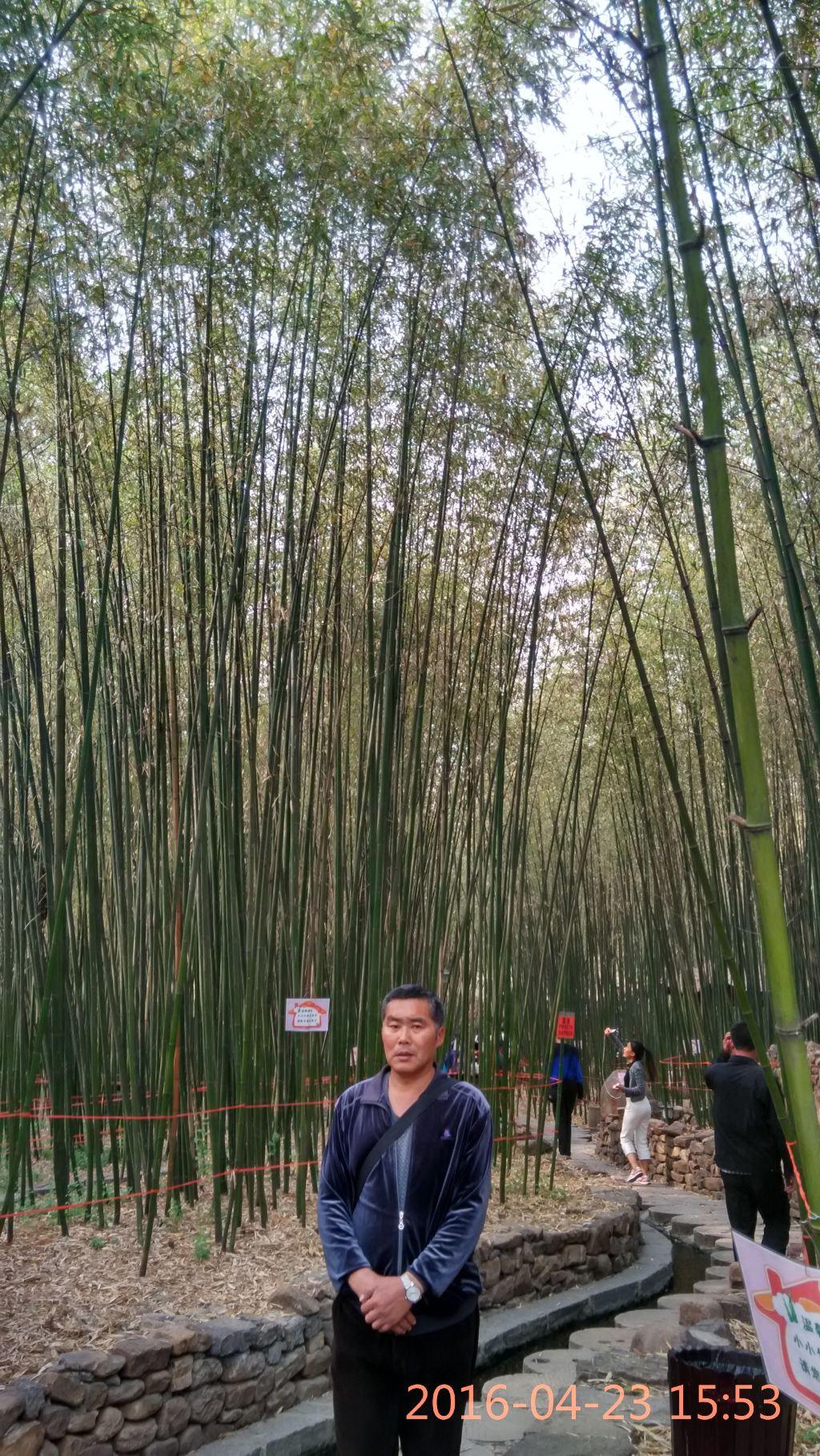 手机壁纸风景山水竹林