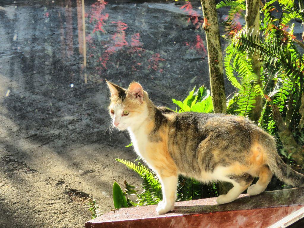 兰卡的小动物都非常温顺!