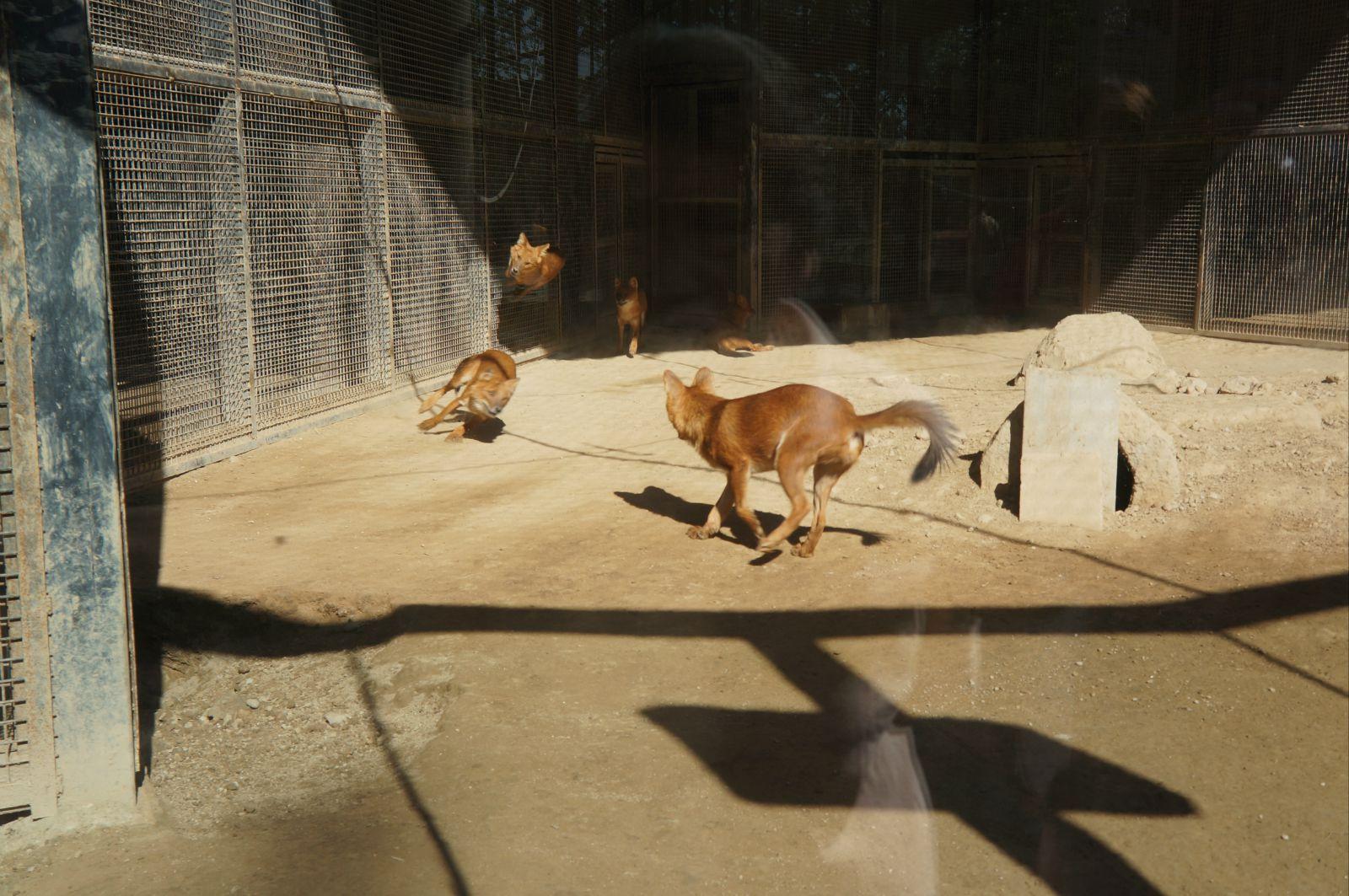 北京动物园 犬科动物区