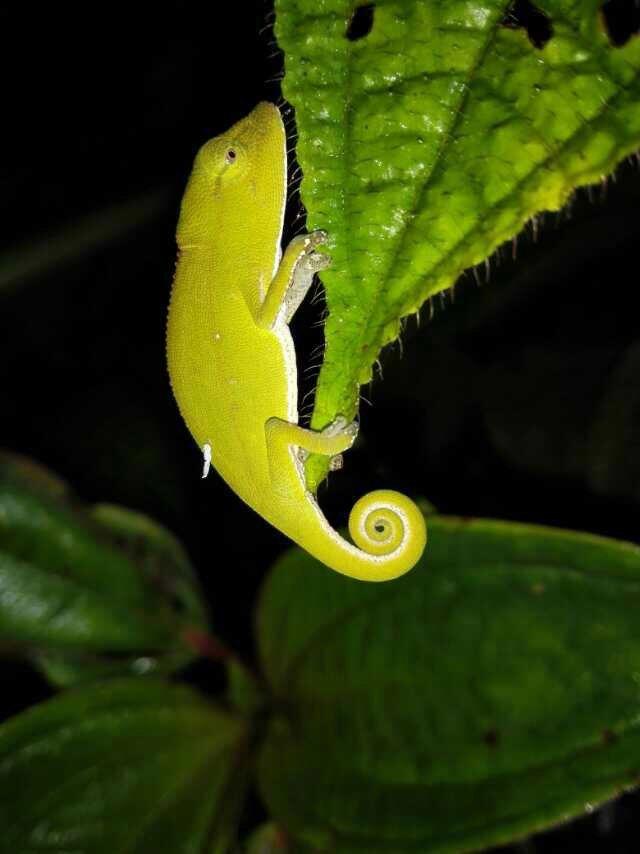 昂達西貝國家森林保護區  Andasibe Reserve   -3