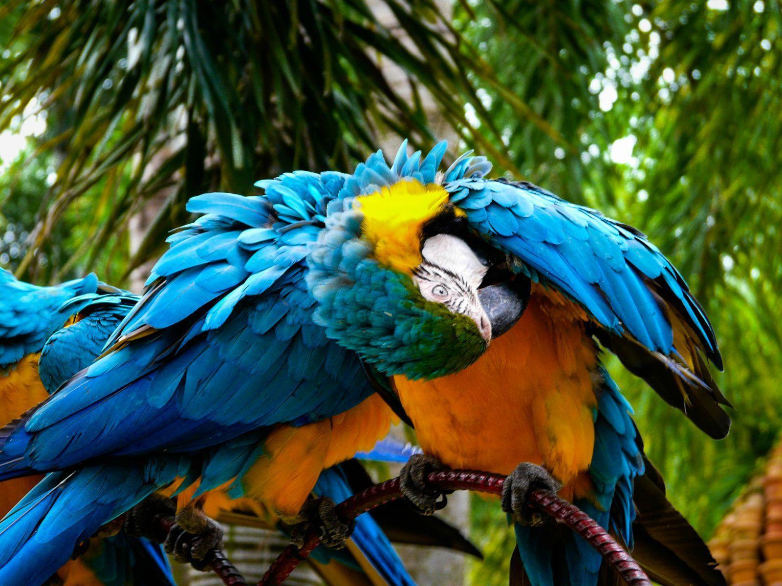壁纸 动物 鸟 鹦鹉 1600_1200