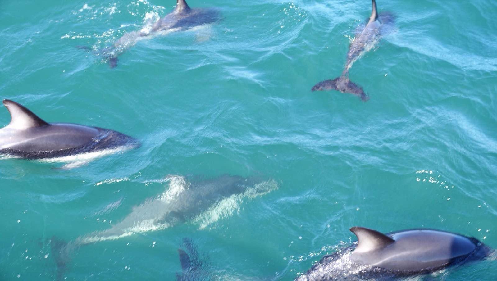 遇见鲸鱼海豚,新西兰南岛东海岸之旅