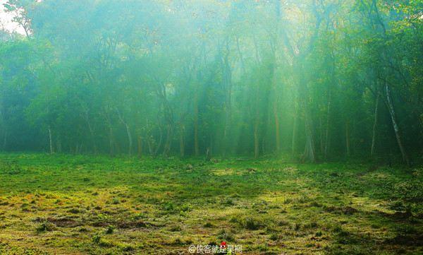 国家森林公园