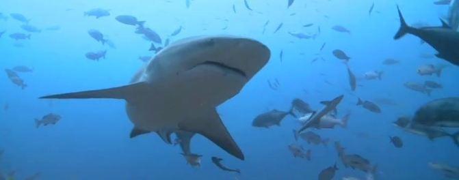 动物 海底 海底世界