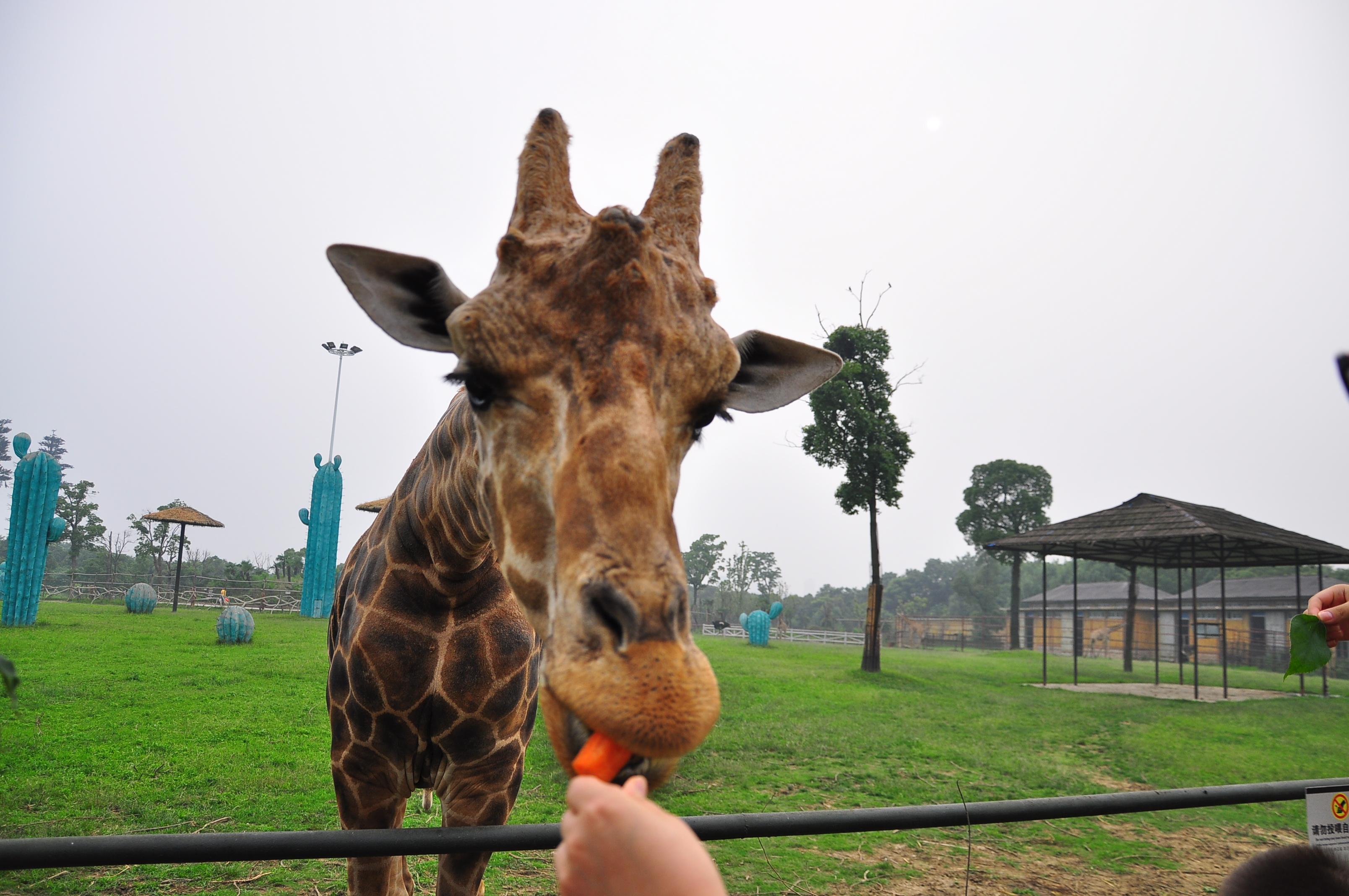 【妈妈去哪儿】淹城野生动物园+常州博物馆=轻松周末
