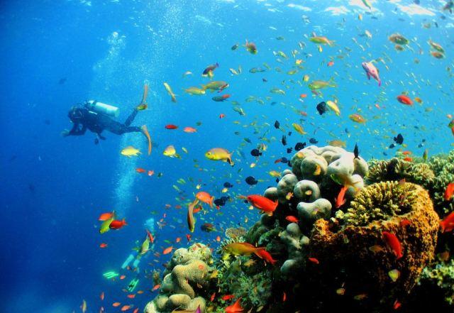壁纸 海底 海底世界 海洋馆 水族馆 桌面 640_441