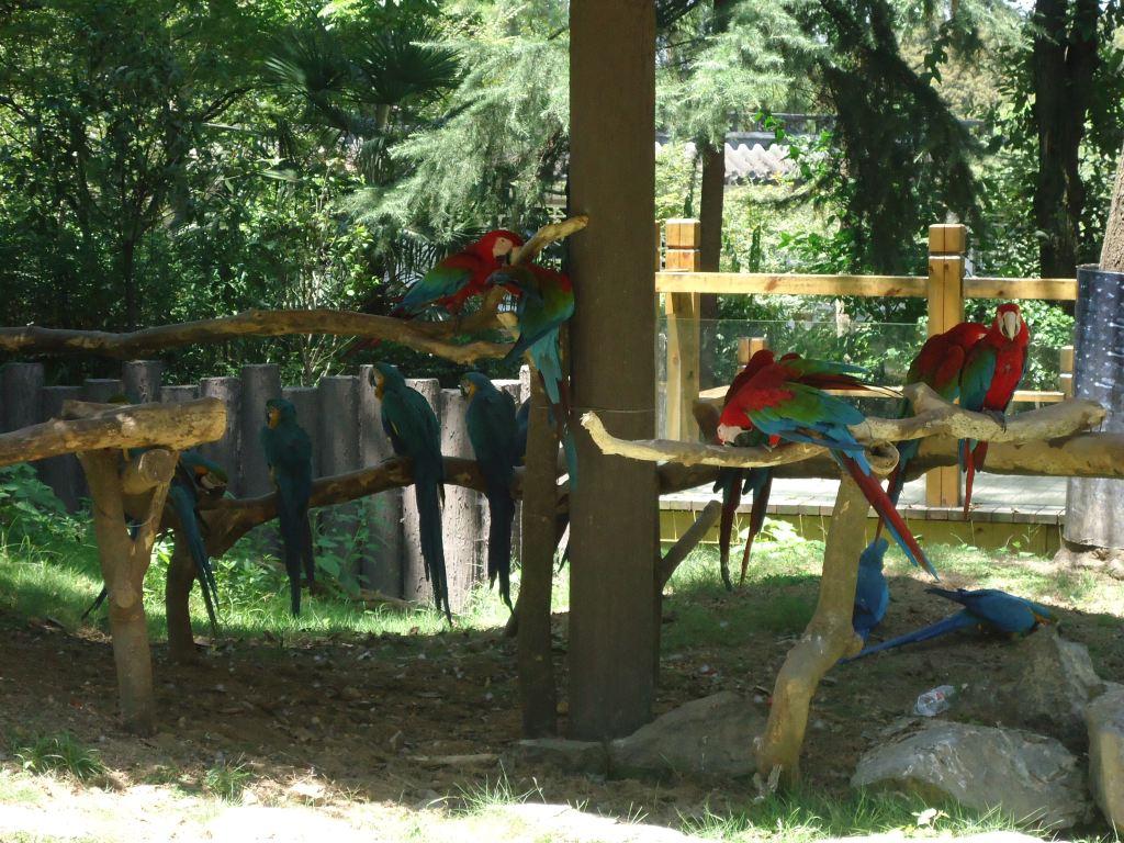 随手拍20之杭州动物园