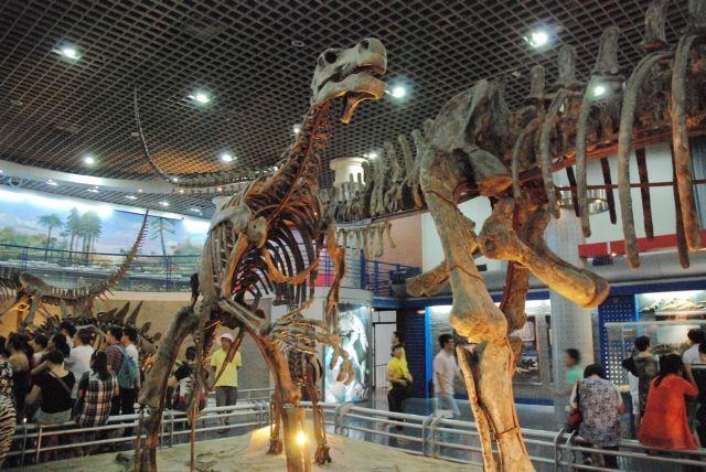 壮观的恐龙骨骼标本