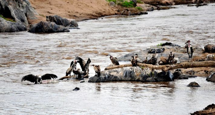 河边动物窝图片