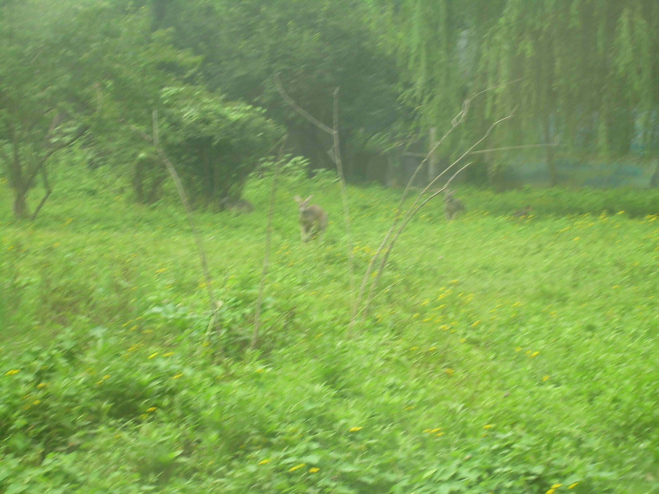 动物园里看风景 - 北京游记攻略【携程攻略】