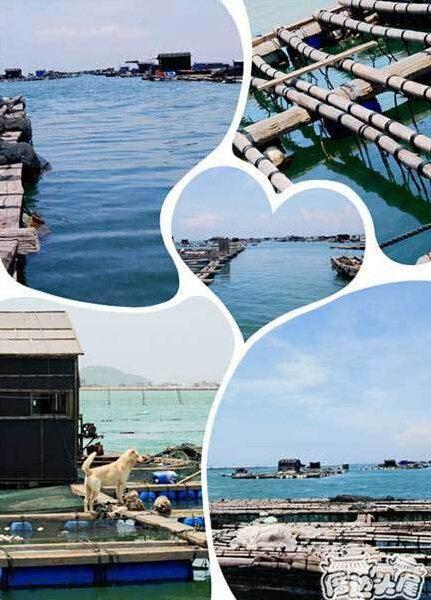 漳浦六鳌海上渔家乐——海钓,吃鲜,休闲