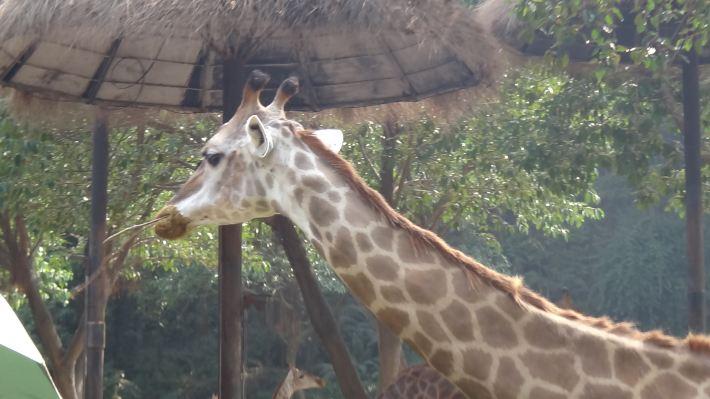 番禺长隆野生动物园