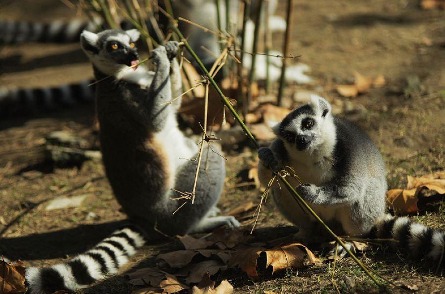 秋天的上海动物园里你只拍动物?亏大了!