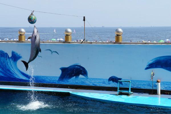海豚表演 一定要看好表演时间 观鸟湿地 19路倒34 千万不要在观鸟