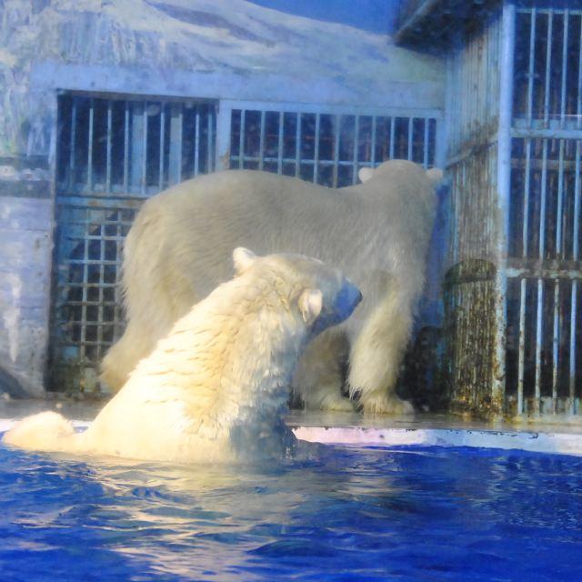 不仅有可爱的动物看,还有很精彩的表演一直穿插着看.乐趣无穷哦.
