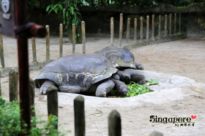 玩乐新加坡动物园singapore zoo