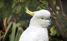 柳岸野生动物保护区-基督城-hiluoling