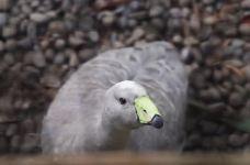 柳岸野生动物保护区-基督城-小凌60