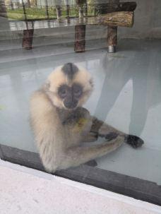 太原动物园-太原-M22****883