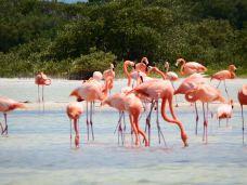 粉红湖-里约拉加尔多-M25****4240