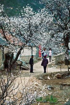 杏花村风景区-池州