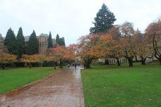 华盛顿大学-西雅图-西溪老翁