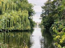 圣詹姆斯公园-伦敦-萱草1988