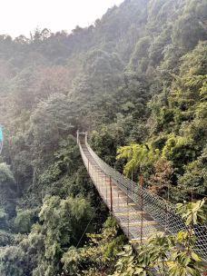 莽山国家森林公园-莽山-新-云
