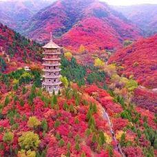 红叶谷-济南-社会颜色