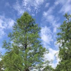 黄山鲁森林公园-广州-萨拉热窝的夏雨荷