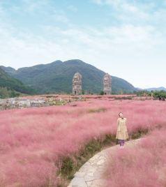 酉阳游记图文-和粉色一年四季的约会 自驾酉阳3天2晚穿越千年的忘忧之旅