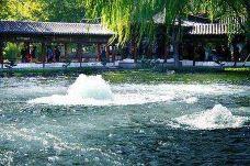 百脉泉公园-章丘区-飞鸟与鱼0010