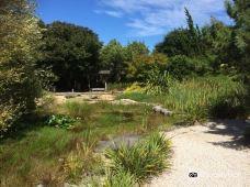 Miyazu Japanese Garden-尼尔森