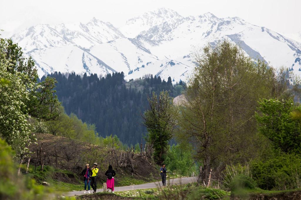 終年不化的雪山,層次分明的雪松,綠茵的山坡,燦爛的花兒,還有灑滿的