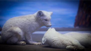 芜湖大白鲸海洋公园 (10)