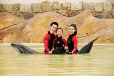 亚特兰蒂斯海豚湾-三亚