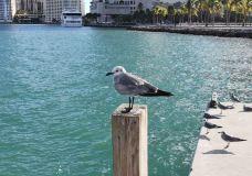 海湾市场-迈阿密-世界美食游走达人