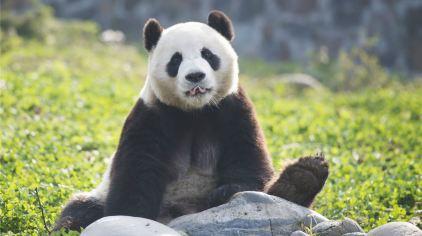 爱宝乐园-熊猫馆 (2)