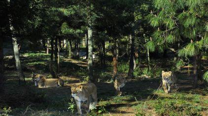云南野生动物园 (6)