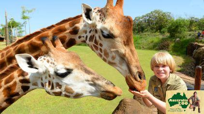 australia zoo5
