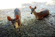 兰卡威野生动物园-兰卡威-doris圈圈
