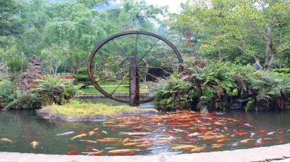 莫里热带雨林 (4)