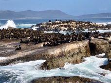 海豹岛-开普敦-健康美丽的芳芳