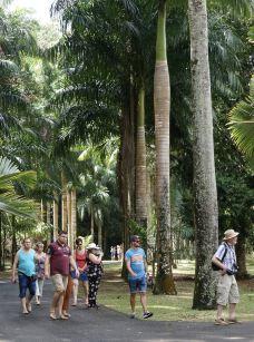 庞普勒斯植物园-毛里求斯-胡大老顽童