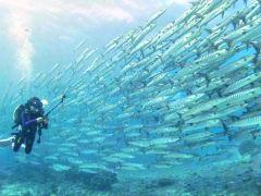 沙巴海岛风光潜水旅拍1日游