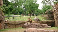 天王寺动物园-大阪-M33****2948