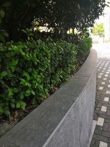 翠湖公园-铜陵-zixunshi99