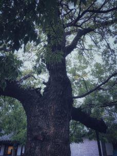 乌金山国家森林公园-榆次区-兰夏的果实